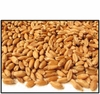 Organic HARD RED WINTER (for SPROUTING) WHEAT BERRIES - 5 LBS