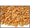 Organic HULLED OATS (OAT GROATS) - 25 LBS - OUT OF STOCK