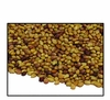 Organic RED CLOVER SEED - 25 LBS