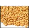 Organic SOFT PASTRY WHEAT BERRIES - 2 LBS