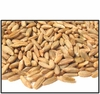 Organic WHOLE KERNEL RYE - 25 LBS - OUT OF STOCK