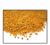 Organic YELLOW MUSTARD SEED (non-sprouting uses) - 2 LBS