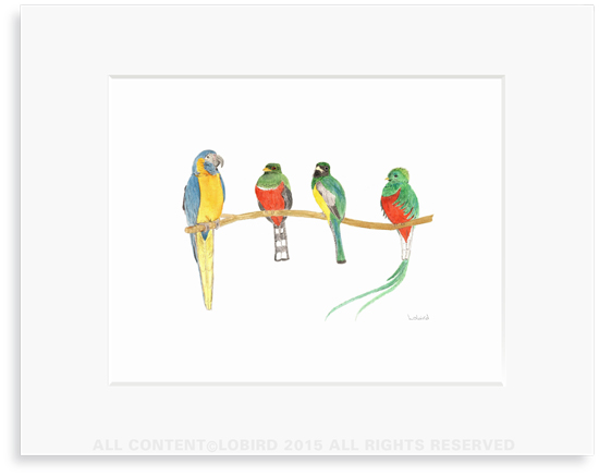 Birds on a Branch - 8 x 10 Print in 11 x 14 Mat