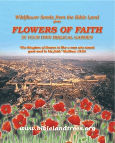 Biblical flower's seeds of the Holy Land