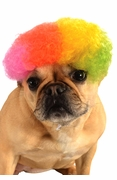 Rainbow Afro Wig for Pets
