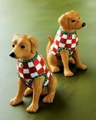 Golden Retriever Salt/Pepper