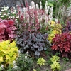 Shop all<br>Shade Plants