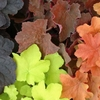 shop more<br>HEUCHERA