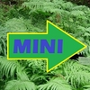 shop more<br>MINI hostas