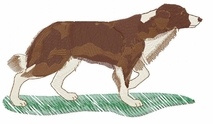 bordercollie002 Border Collie (small or large design)