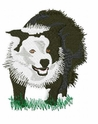 bordercollie046 Border Colllie (small or large design)
