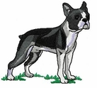 boston023 Boston Terrier (small or large design)
