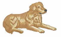 golden091 Golden Retriever (small or large design)