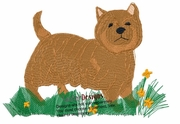 norwich004 Norwich Terrier (small or large design)
