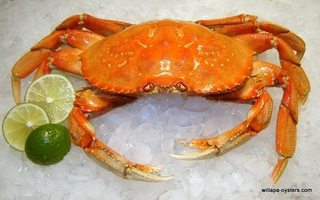 1 Dungeness Crab