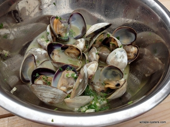 Willapa Manila Clams