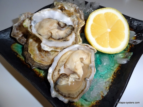 Willapa Pacific Oysters - Extra Small Selects