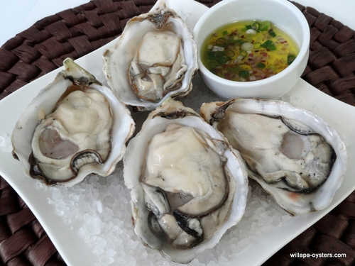 Willapa Pacific Oysters - Large