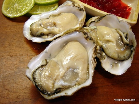 Willapa Pacific Oysters - Small
