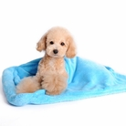 Blue Blanket Dog Bed