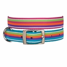 Brite Stripe Dog Collars & Leashes
