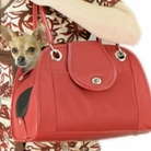 Red Open Tote Dog Carrier