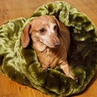 Trundle Dog / Cat Bed