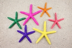 Assorted Dyed Finger Starfish