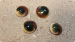 Cat Eye Shells
