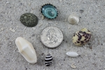 "Small and Tiny BULK shells UP TO 1"" long"