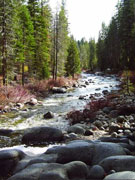 Dec 2008 - March 2009 <p>Plumas National Forest</P>