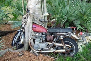 Tree Eats Motocycle