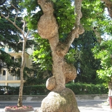 Warty Tree - Wooden Branch (link)