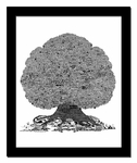 Music History Trees - Prints & Lithographs