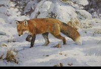 CARLSON: A SOUND IN THE SNOW - RED FOX</a><br><b>- SOLD</b>