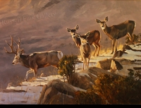 "HACKING: MULE DEER - INTO THE CANYON</a> <img src=""http://edit.store.yahoo.com/I/yhst-53343112752519_1792_1103024"">"