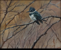 "ST. CLAIR: BELTED KINGFISHER</a> <img src=""http://edit.store.yahoo.com/I/yhst-53343112752519_1792_1103024"">"