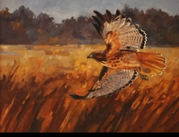 "ST. CLAIR: RED-TAILED HAWK</a> <img src=""http://edit.store.yahoo.com/I/yhst-53343112752519_1792_1103024"">"