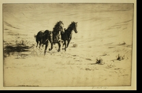 "WEST:  WILD HORSES</a> <img src=""http://edit.store.yahoo.com/I/yhst-53343112752519_1792_1103024"">"