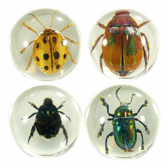 4PC Beetle Marble Set