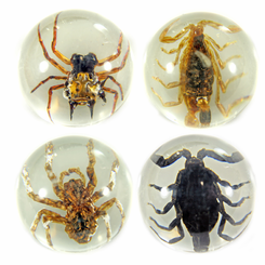 4PC Large Scorpion And Spider Marble Set