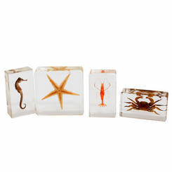 4PC Sea Life Specimen Biology For Kids