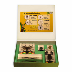 5PC Arthropod Biology For Kids