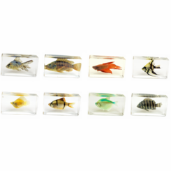 8PC Medium Fish Paperweight Set