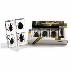Beetle Paperweight Collection