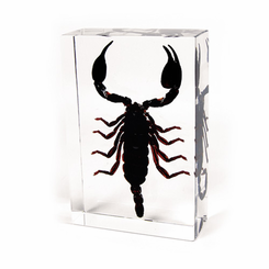 Black Scorpion Desk Decoration