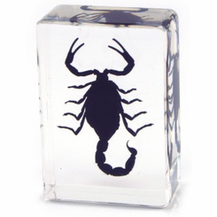 Clear Black Scorpion Paperweight