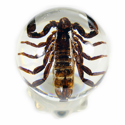 Clear Black Scorpion Small Globe