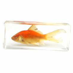 Clear Common Goldfish Large Paperweight