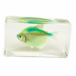 Clear Green Skirt Tetra Medium Paperweight